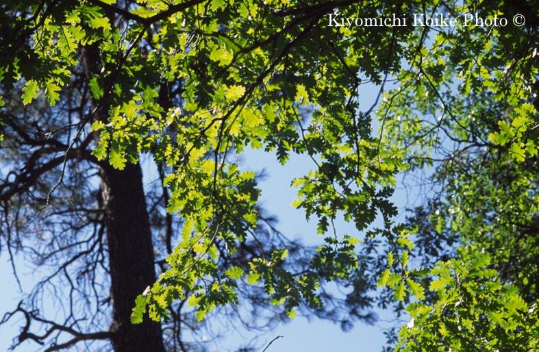 バンデリア国定公園 Bandelier National Park